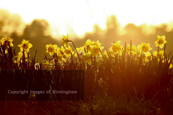 Spring in Cotteridge Park, Birmingham.
