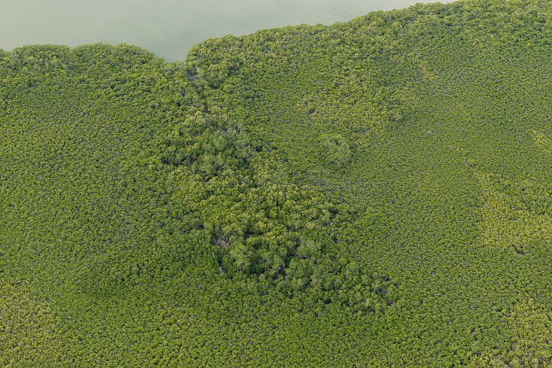 Aerial of thick mangrove forest along the coast of Northern Division, Vanua Levu, Fiji. December 2013.