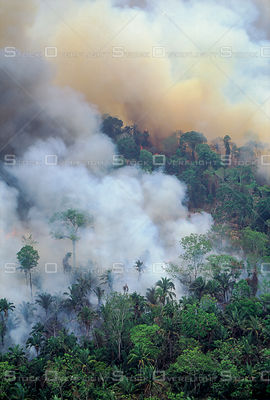 Burning and Deforestation of Amazon Rainforest Brazil