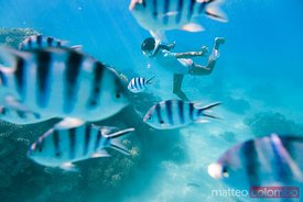 Woman swimming underwater with tropical fishes