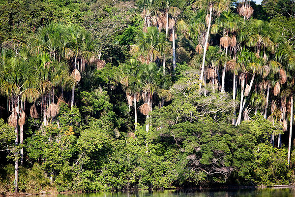 More than half of the world's estimated 10 million species of plants, animals and insects live in the tropical rainforests. One-fifth of the world's fresh water is in the Amazon Basin