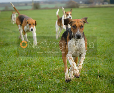 The Belvoir Hunt at Highfield Farm 9/12 photos