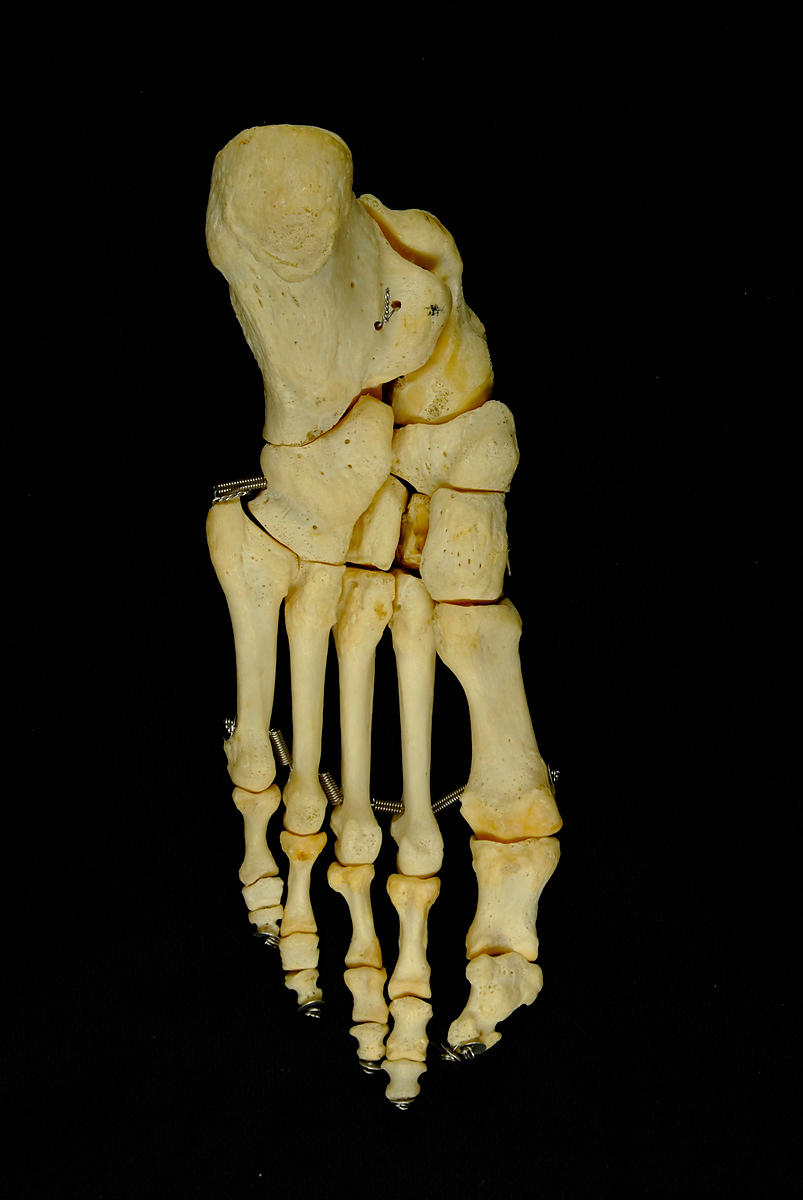 Left foot articulated plantar view