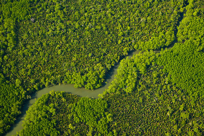 Aerial view of lowland rainforest and tributaries of the Kinabatangan River, Sabah, Borneo, Malaysia, April 2007