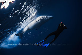 Swimming with a whale