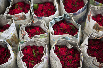 BANGKOK FLOWER MARKET  Art Photographs