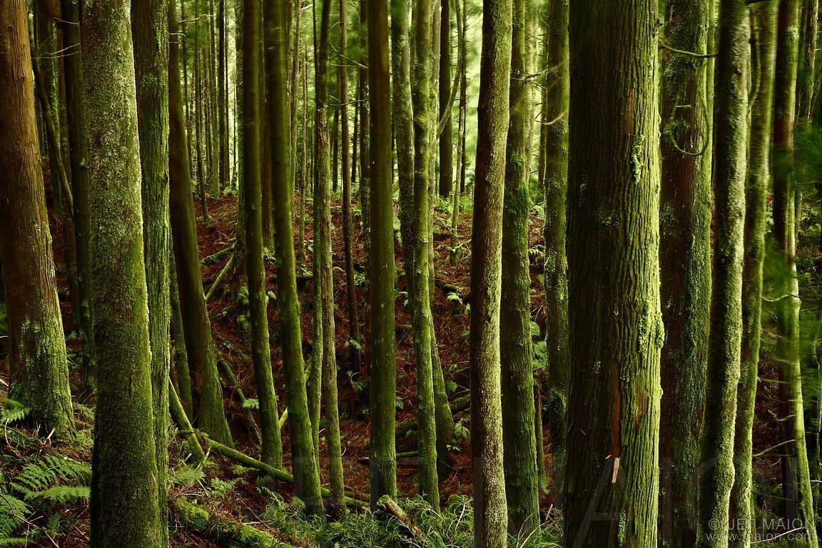 Dda9f1be 1df9 11e1 A648 Fdc95b6a7d82 Patterns Of Trees And Moss on Apple Pattern