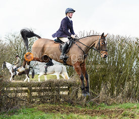 Nicola Wilson jumping the hunt jump at Newbold. The Cottesmore Hunt at Newbold Farm 16/2