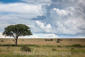 Scenic shot of elephants (Loxodonta africana africana) on the grassy Serengeti plains, Serengeti National Park, Tanzania; Landscape
