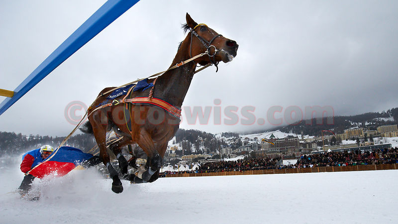 White Turf 2012 St.Moritz - Skikjoering Feb19 photos
