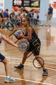 melbourne tigers photos