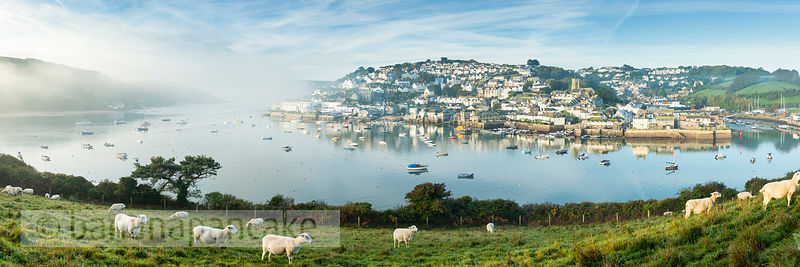 BP6567- Sheep at Snapes Point, Salcombe (Panoramic)