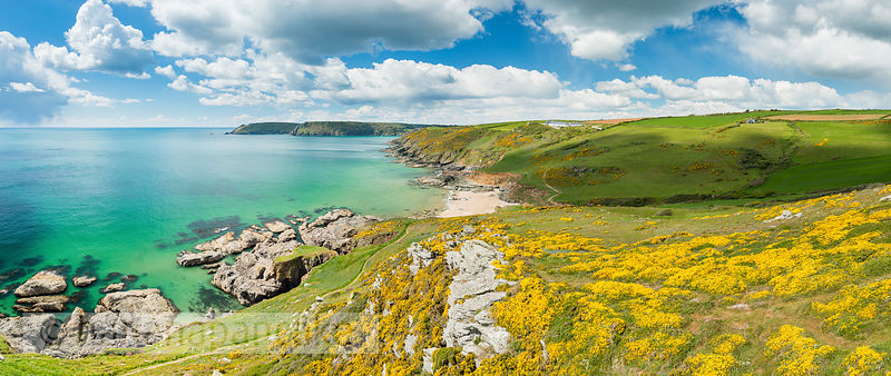 BP5972 - Spring gorse on the coast at Gara Rock
