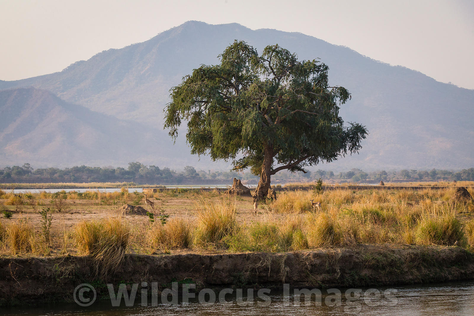 Near Gwaya tented camp, Mana Pools National Park, Zimbabwe; Landscape