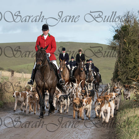 Hounds & Horses photos