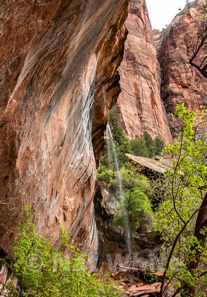Zion_National_Park-waterfall-Zion_NP_-42April_19_2018NAT_WHITE-April_19_2018-NAT_WHITE