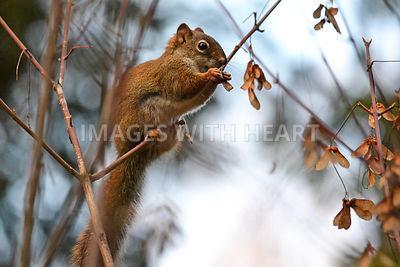 Squirrel in Tree Full of Seeds