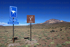 Reduce speed for rheas signs near Salar de Surire , Cerro Capitan peak in background , Region XV , Chile