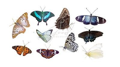Set of Isolated Butterflies and Moths