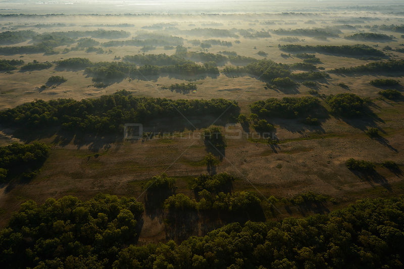 Aerial view over Letea forest at dawn, within the Danube delta rewilding area, Romania, June 2012