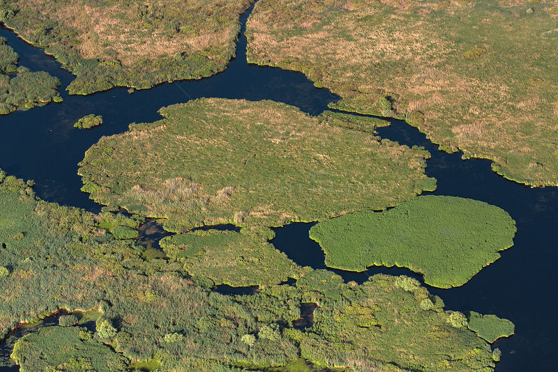 Aerial view of Danube Delta, the second largest wetland in Europe and the largest reed bed in the world, showing reed islands, Romania