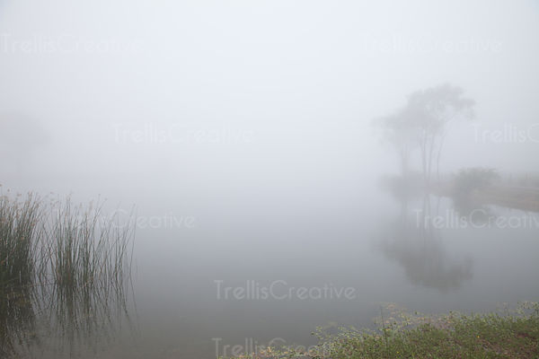 A sureal fog ascends over a lake