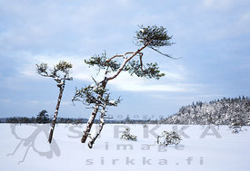A Grey Winter Day in Valkmusa National Park