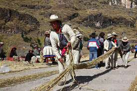 A man aligns the thin grass ropes prior to making the thicker ropes for rebuilding the bridge, Q'eswachaka , Canas province , Peru