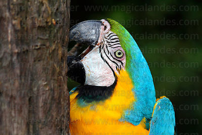 Parrots Macaws Toucans photographs