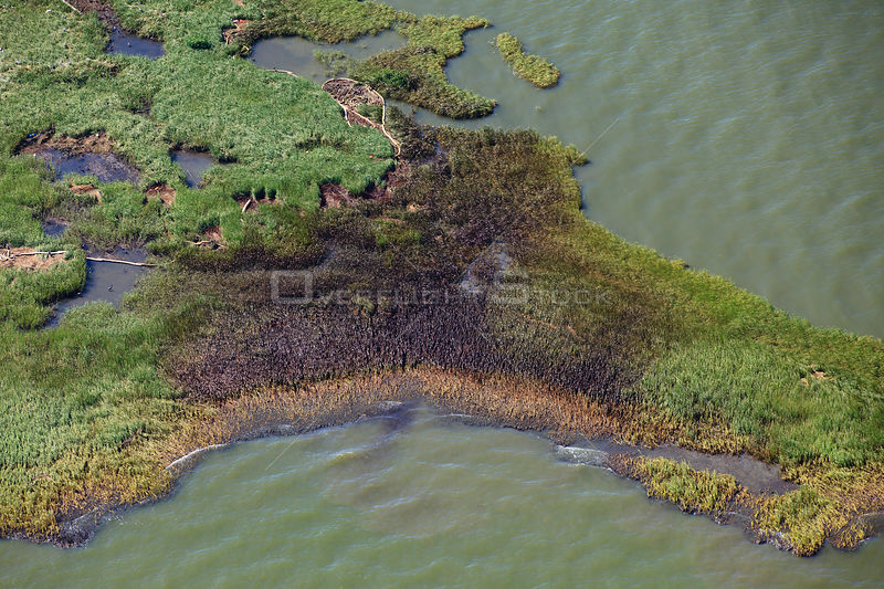 Aerial view of an oil covered island and displaced oil containment boom in the Barataria Bay area of the Mississippi River delta, contaminated as a result of the BP Deepwater Horizon oil leak in the Gulf of Mexico. Plaquemines Parish, Louisiana, USA, July 2010.