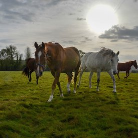 Haras des Etangs photos chevaux