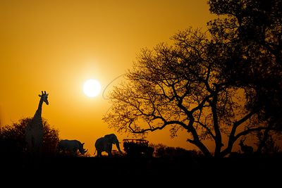 African Sunset Silhouette With Copy Space