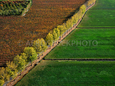 305345 | Lienden, fruit growing and trees in autumn colours in the Betuwe