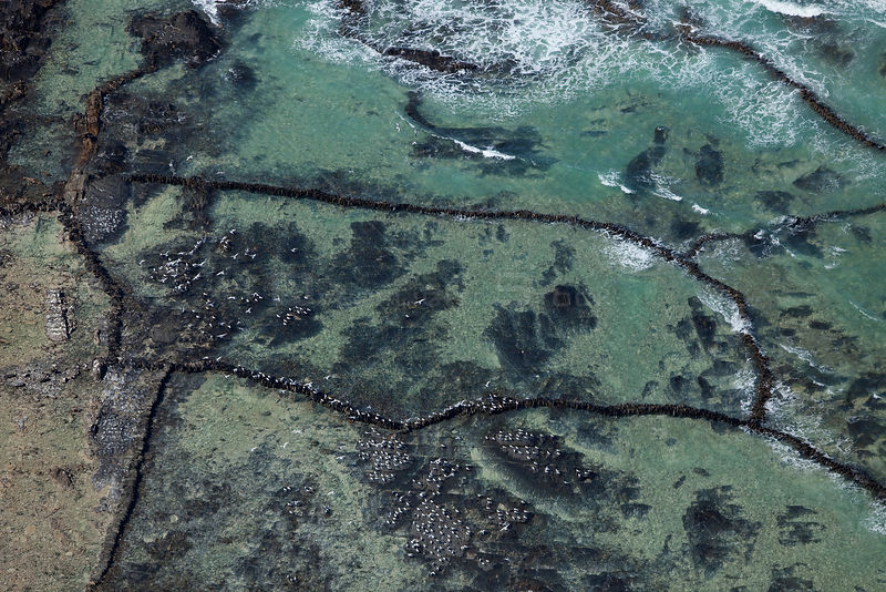 Aerial photo of Terns and traditional stone fish traps, Cape Agulhas, Southern Cape, South Africa .August 2009