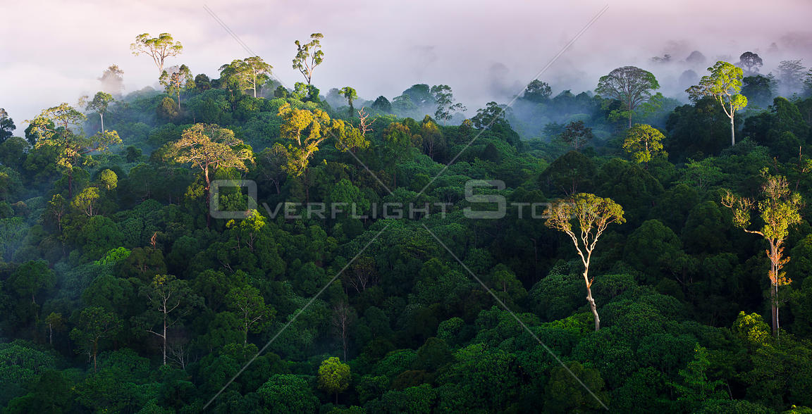 Lowland rainforest at sunrise. Danum Valley Conservation Area, Sabah, Borneo.