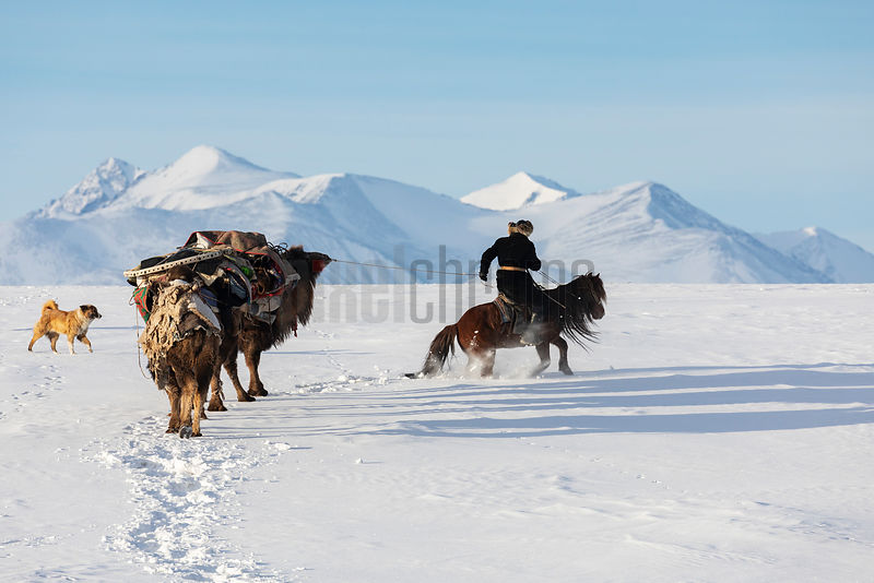 Bekysh Leading Camels through Thick Snow During the Migration