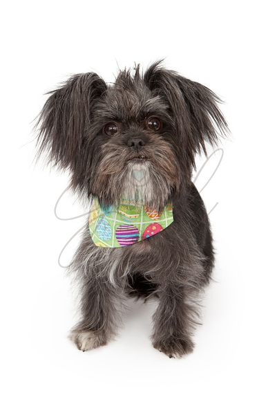 Mkxed Breed Dog Wearing Easter Bandana