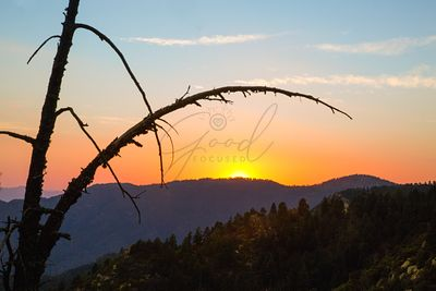 Tree Branches Silhouette in Mountain Sunset