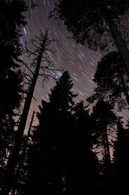 The Old Forest of Multiharju in the Night