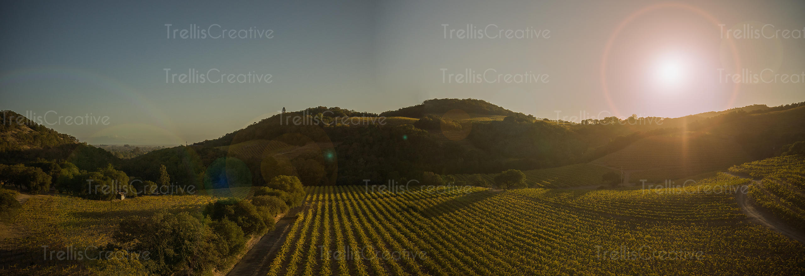 Panoramic ariel view of a vineyard in Sonoma Valley, California