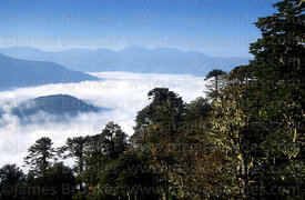Valdivian temperate forest and cloud filled valleys , Huerquehue National Park, Region IX, Chile