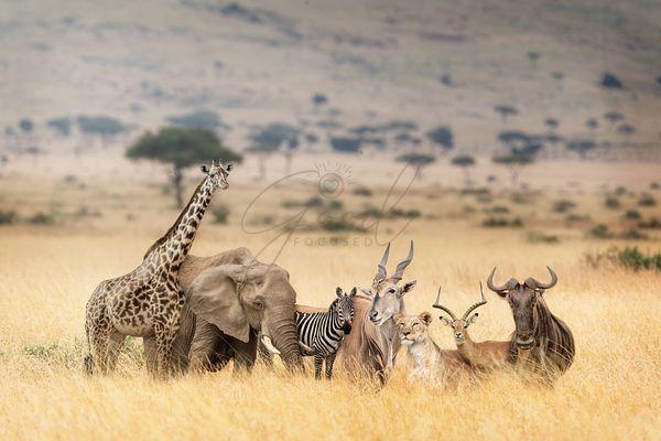 African Safari Animals in Dreamy Kenya Scene large