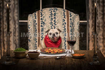 Pug dog at formal dining table