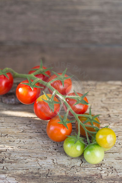outdoors shot of red and green cherry tomatoes on vine against wood