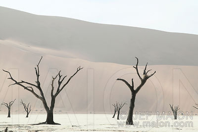 Dead trees and dune