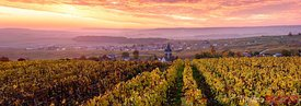 Autumn in the vineyards of Ville Dommange, Champagne, France