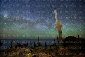 Echinopsis atacamensis (pasacana subspecies) cacti, Milky Way, shooting star and green airglow, Incahuasi Island, Salar de Uyuni, Bolivia