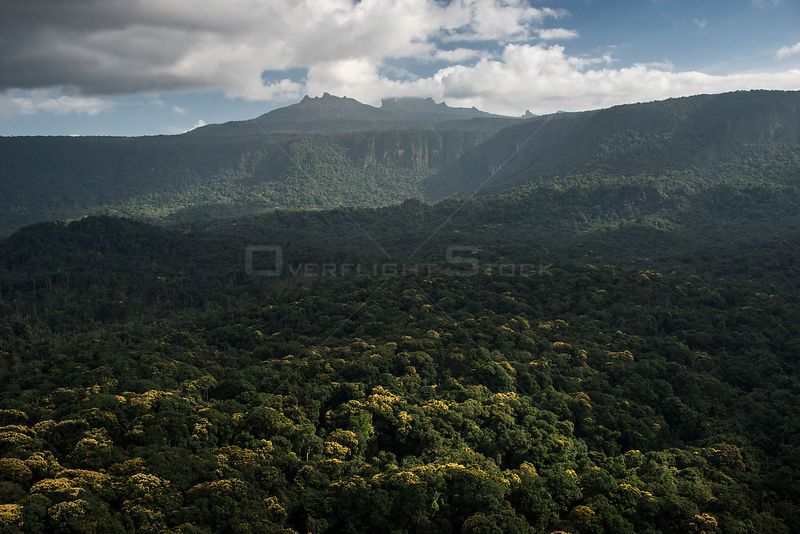 Mount Ayanganna amongst primary rainforest, Pakaraima Mountains, Guyana, South America