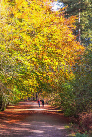 Autumn Stroll In Delamere Forest
