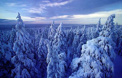 Snowy forest in Rokua National Park
